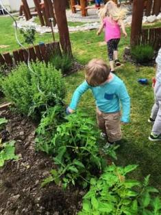 Šel zahradník do zahrady